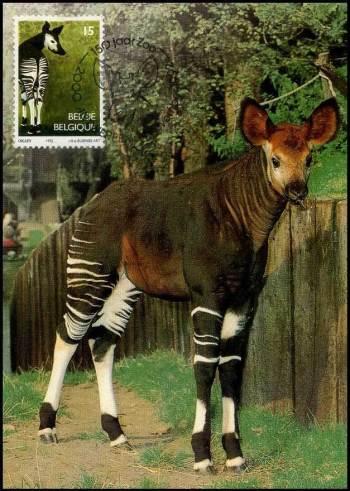 maxikaart-okapi-1992