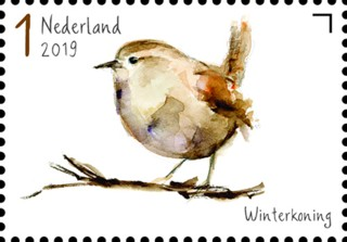 Tuinvogels in Nederland - Winterkoning