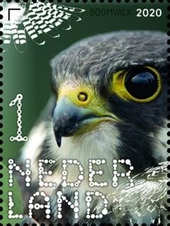 Beleef de natuur - roofvogels en uilen - boomvalk