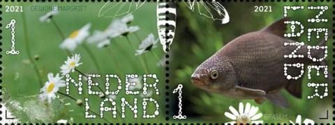 Beleef de natuur - De Onlanden - gewone margriet en brasem