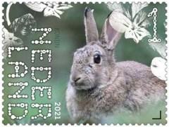 Beleef de Natuur - Duin en Kruidberg - konijn