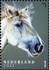 Nederlandse paardenrassen [4] - Bonnie