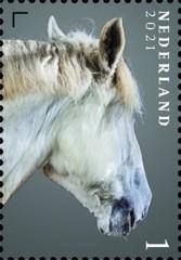 Nederlandse paardenrassen [6] - Bonnie