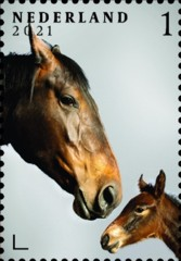 Nederlandse paardenrassen [9] - Legende en Sophia