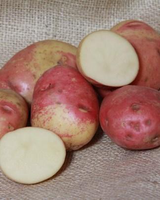 Ambo Seed Potato