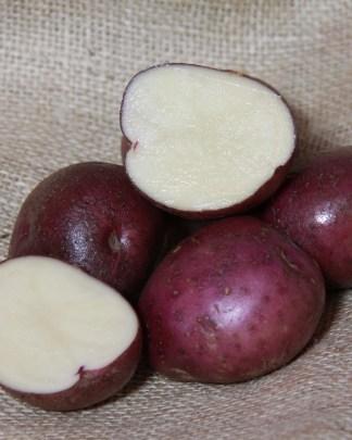 Arran Victory Seed Potatoo