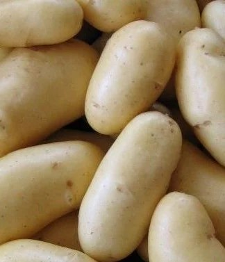 Belle De Fontenay Seed Potatoes