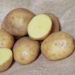 Colleen Seed Potatoes