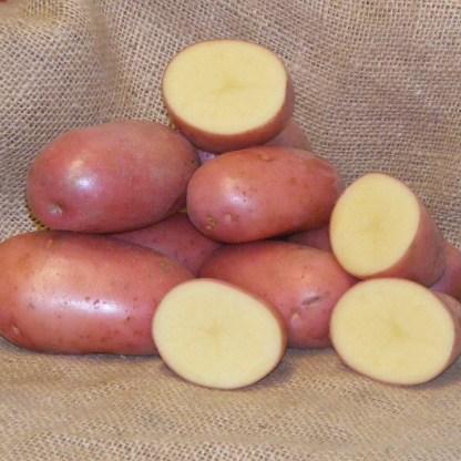 Foxton Seed Potatoes