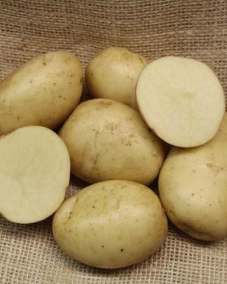 Gatsby Seed Potato