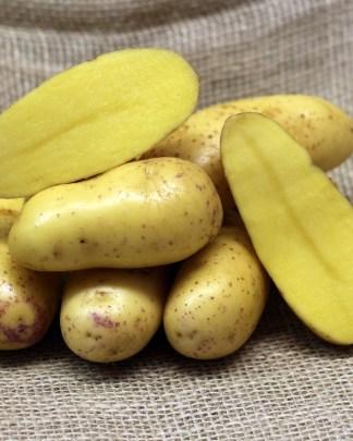 Mayan Gold Seed Potatoes