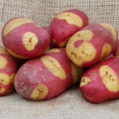 Mayan Rose Seed Potato