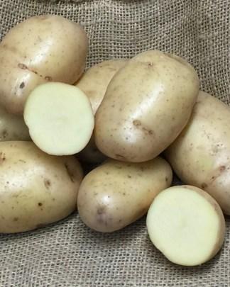 Sarpo Shona Seed Potato