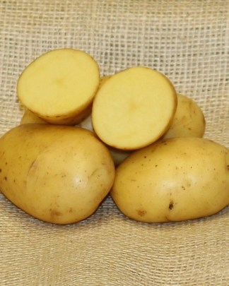 Twinner Seed Potatoes