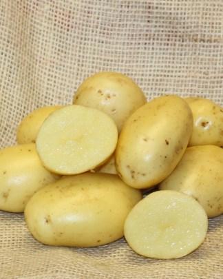 Vitabella Seed Potatoes