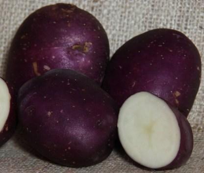 Yetholm Gypsy Seed Potato