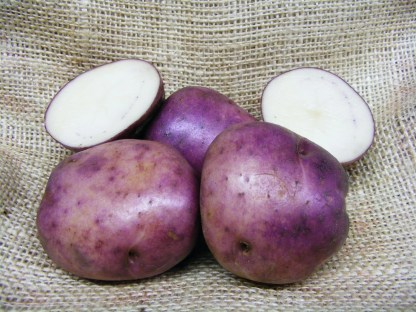 Edzell Blue seed Potato