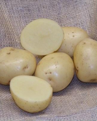 Swift Seed Potatoes