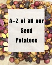 a-z of our seed potatoes