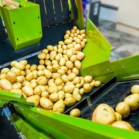 Could the global loss of food service pressure the UK's potato processing market?