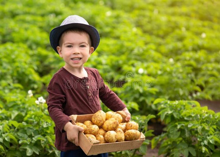 Kids-and-potatoes27-Dreamstime