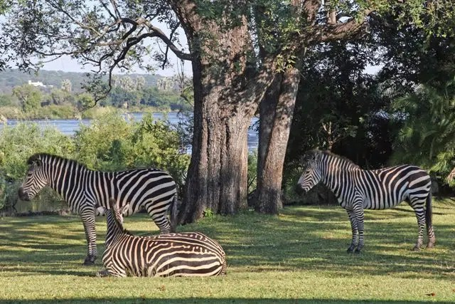Zambezi National Park. Picture from http://www.atravelbook.com/top-tourist-attractions-in-zimbabwe/