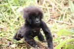Naming Babies: Kwita Izina Ceremony in Rwanda is a great tourism attraction