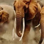 E.A. Wildlife Directors meet to strategize on way forward for Wildlife Protection