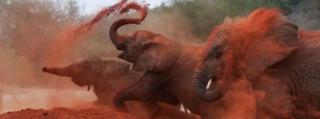 Red Elephants of Tsavo. Image from http://kibokokenyasafaris.com/package/3-days2-nights-tsavo-east-and-west-safari/