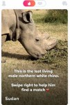 Ol Pejeta Partners With Tinder To Save The Northern White Rhino From Extinction