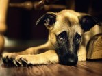 5 Things To Consider When Getting A Family Dog