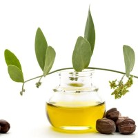 Beauty: 5 Benefits Of Jojoba Oil Vs Coconut Oil