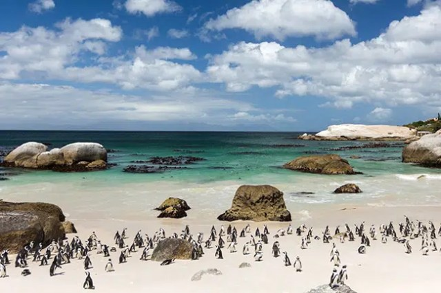 Boulders Beach - Cape Town - Outdoors