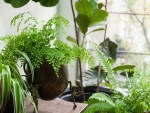 Lifestyle: How To Take Care Of Your Potted Plants