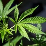 Business: What The Legalization Of Marijuana Could Mean For The Economy & Agribusiness In Kenya