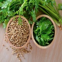 7 Health Benefits Of Coriander (Dhania) That You Might Not Know About