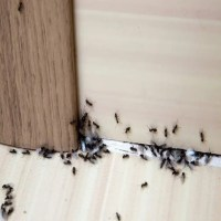 6 Natural Remedies For Household Pest Control
