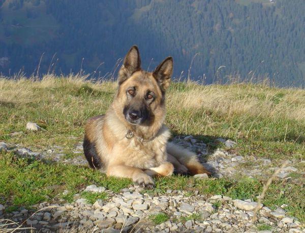 Italie: Le chien le plus fidèle du monde!