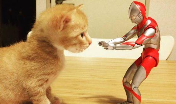 Un chaton sauvé par un super-héros !