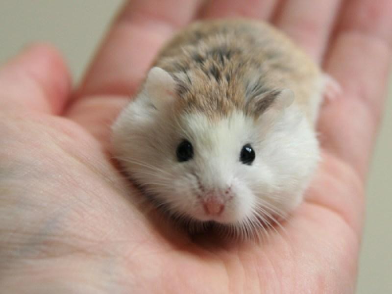 Un hamster refusé dans un avion: Sa propriétaire décide de s'en débarrasser de la plus abjecte des façons !