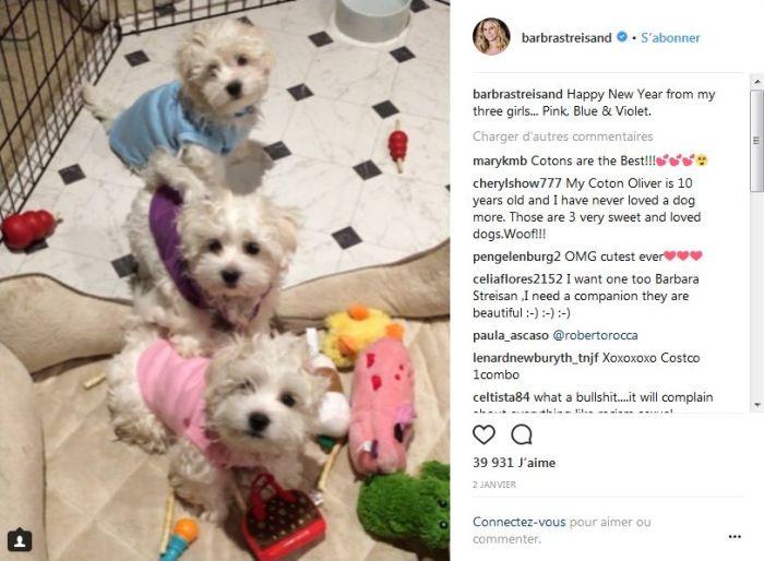 Barbra Streisand : Taclée par la PETA pour avoir cloné sa chienne disparue !