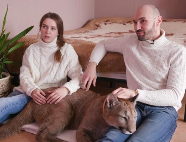 Ce couple vit dans un studio avec… un puma de 2 ans !