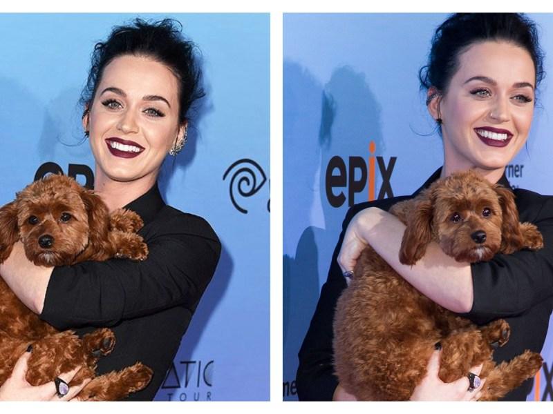 L'assistante de Katy Perry devient un héros après avoir sauvé le chien de la chanteuse
