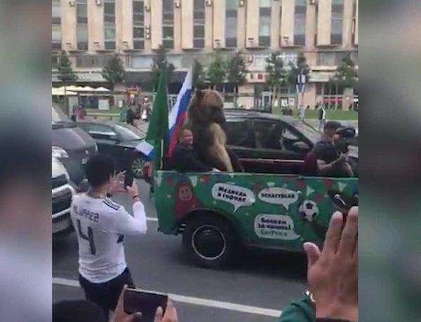 Un ours célèbre la victoire russe avec une vuvuzela
