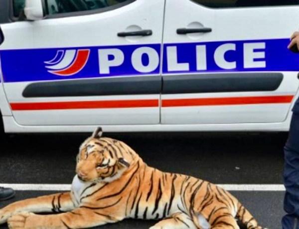 Un tigre en peluche provoque le chaos au Mans
