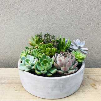 Concrete Succulent Bowl Arrangment