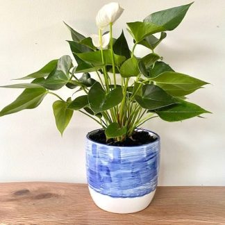 Flamingo Flower Ceramic Blue Pot