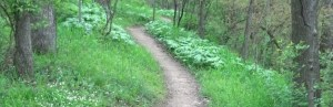 cropped-cropped-singletrack.jpg