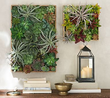 Succulent Wall  Pottery Barn