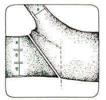 Třetinové pravidlo při řezu na hlavní/vedlejší větev.